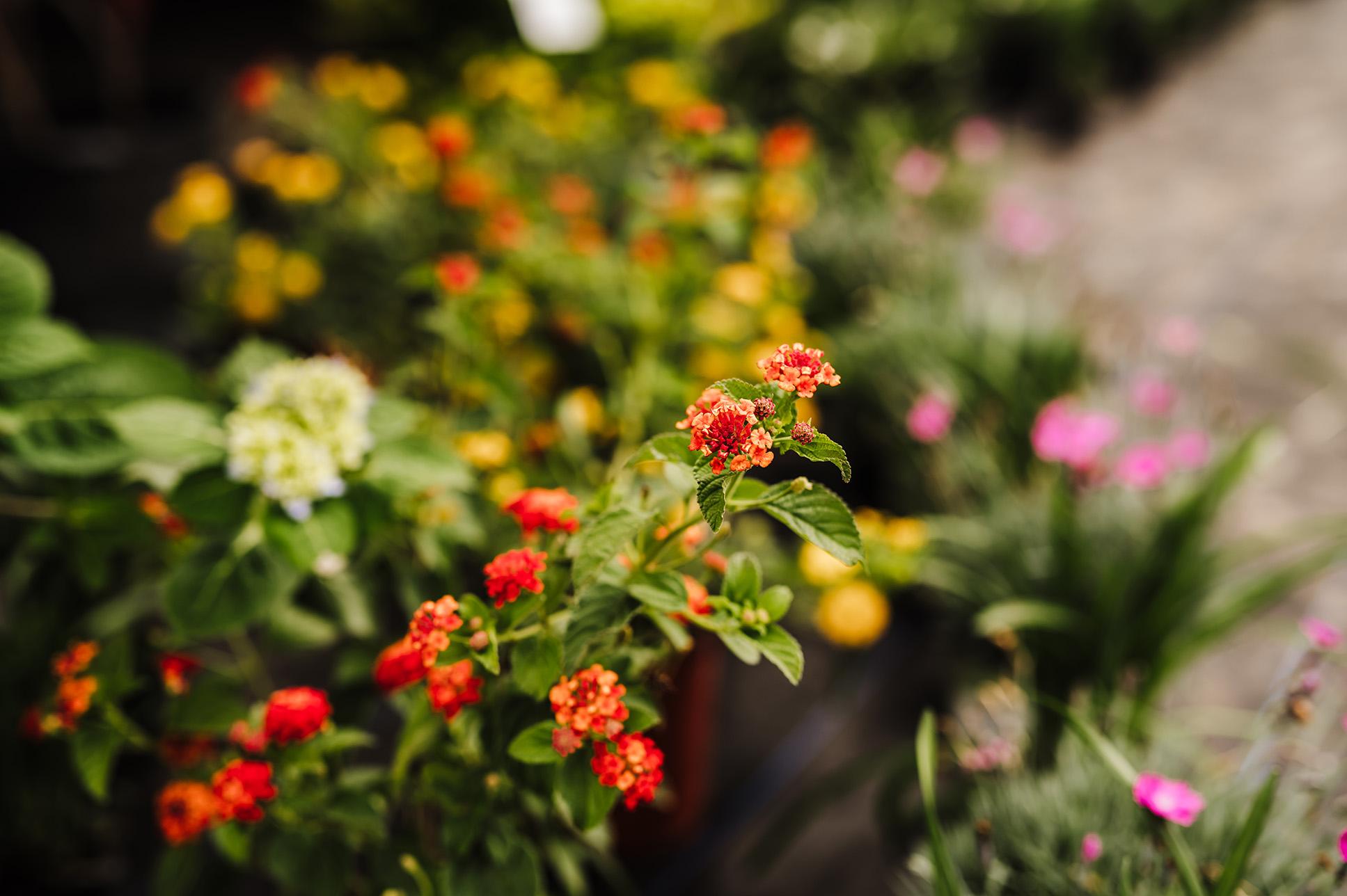 Foliage-Color-WEB