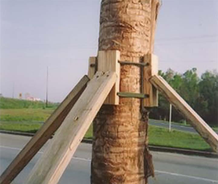 Arborbrace Palm Brace Kit polyprop-nylon UV webbing2